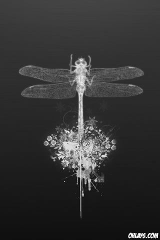 Dragonfly iPhone Wallpaper