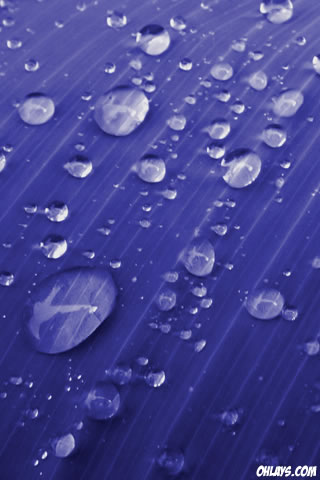 Water Drops iPhone Wallpaper