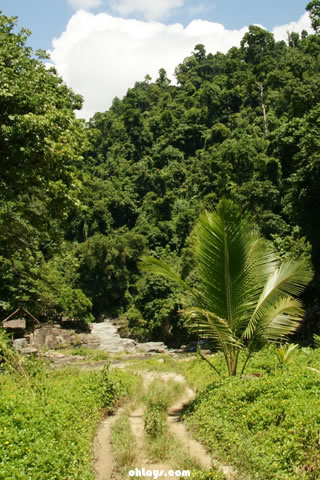 Amazon Rainforest iPhone Wallpaper