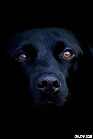 Dog iPhone Wallpaper