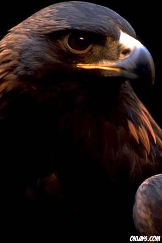 Eagle iPhone Wallpaper