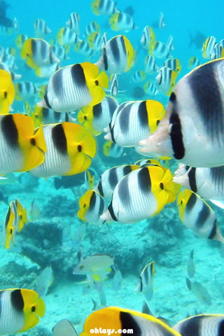 Tropical Fish iPhone Wallpaper