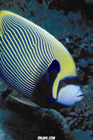 Exotic Fish iPhone Wallpaper