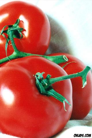 Tomatoes iPhone Wallpaper