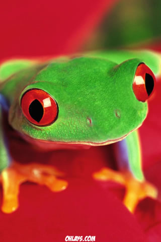 Frog iPhone Wallpaper
