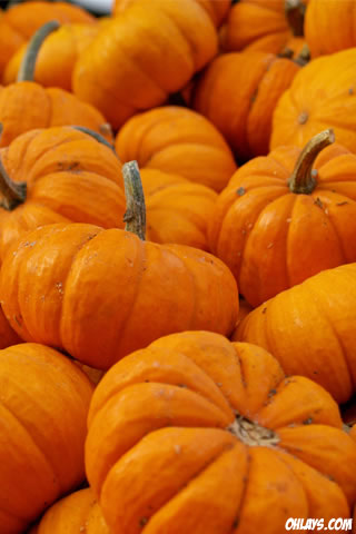 Pumpkins iPhone Wallpaper
