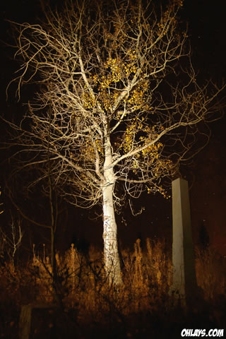 Scary Tree iPhone Wallpaper