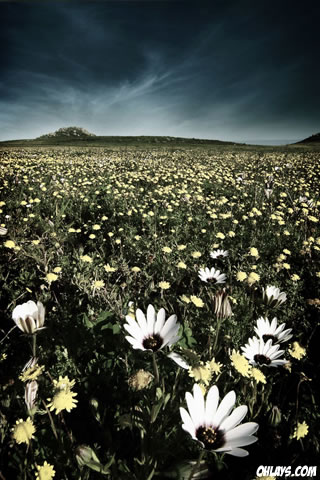 Meadow iPhone Wallpaper