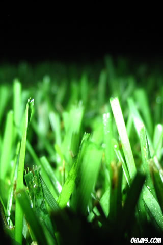 Grass iPhone Wallpaper