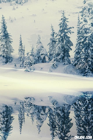 Snow iPhone Wallpaper