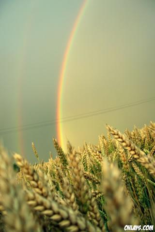 Rainbow iPhone Wallpaper