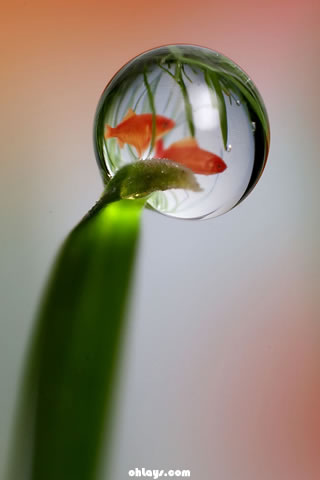 Water Drop iPhone Wallpaper